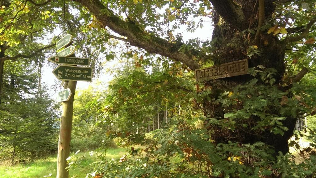 Die Kisseleiche ist einer der ältesten Bäume auf diesem Weg.