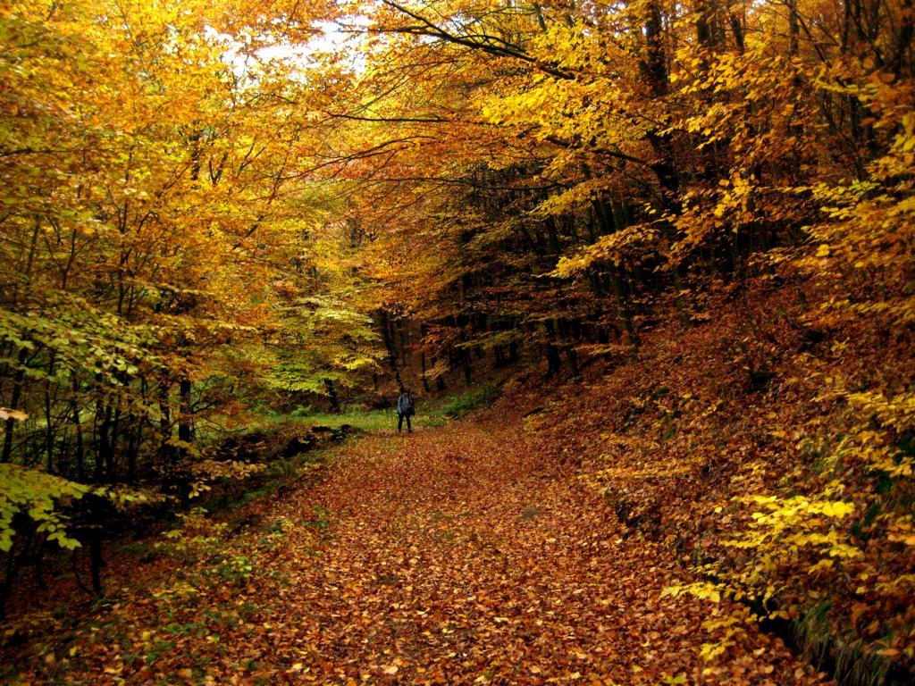 Ein bunter Herbst im Vessertal