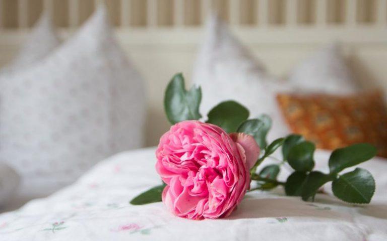 Rose auf Bett